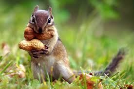 squirrel and nuts