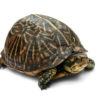 turtle-commons