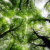 gree trees Photo by Ed van duijn on Unsplash