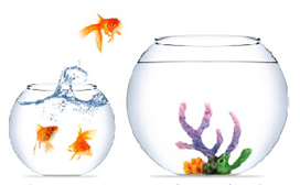 AFA move jumping fish