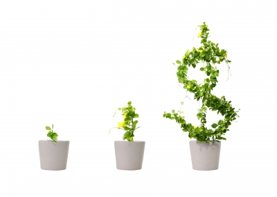 growing money tree